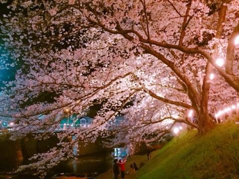 美祢市厚狭川河畔でお花見で初お花見♫