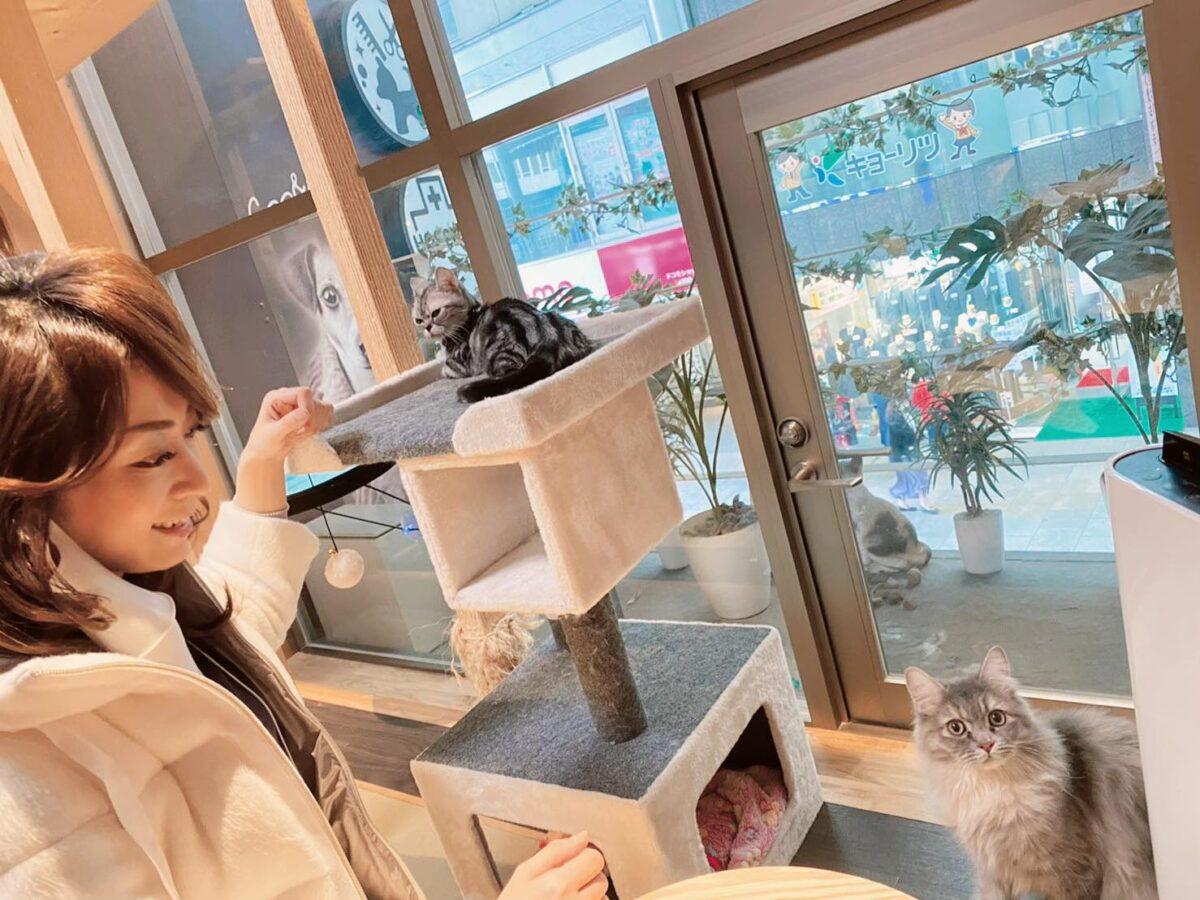 猫カフェに行ってきました♪
